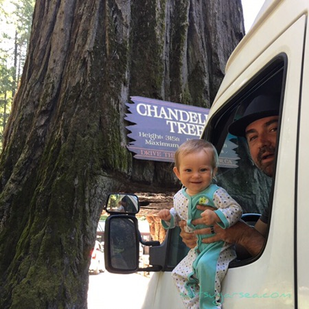 Baby at chandelier drive-thru tree one of California's drive thru trees
