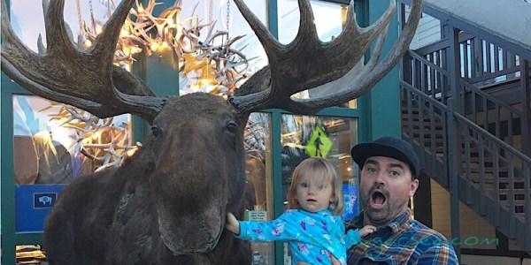 Jackson wy stuffed moose