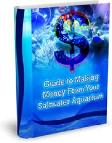 Guide to Making Money from your Saltwater Aquarium Fish and Coral