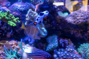 Saltwater Fish and Coral Available at Aquatic Treasures of Southern Nevada