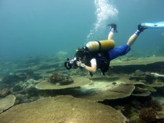 Off season diving in the Maldives