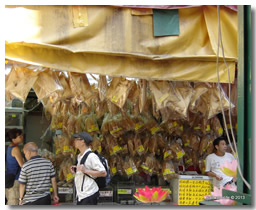 Importance of sharks section shark fins for sale in china