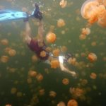 Surrounded by jellies, Palau