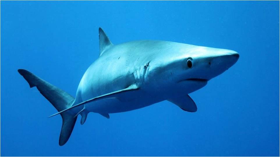 School Outreach; Shark Program