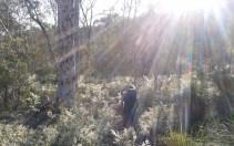 bibbulman-trail-hiking