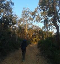 bibbulmun-track-moonrise