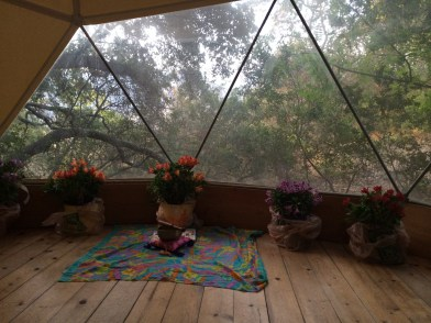 My yurt at Ojai, with alstromeria I was taking back to plant at home