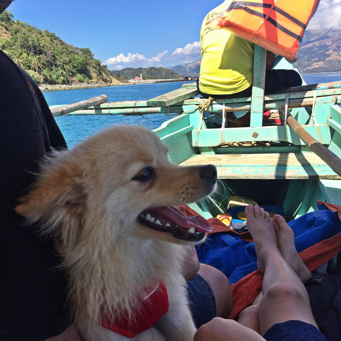 If You Want To Take Your Pet Out Of Town In The Philippines Read