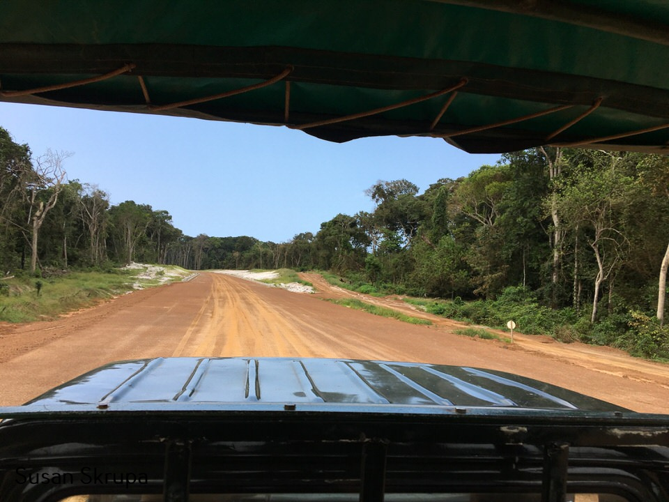 Gabon - view of jungle from 4X4