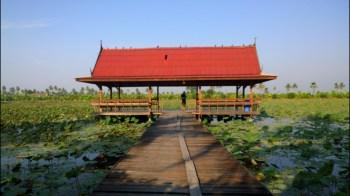 lotus-farm-at-nakhon-pathom-bike-route