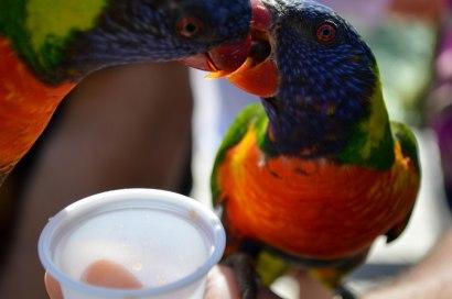 Sharing the nectar