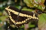 Naples BG Butterflies (11)