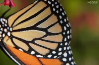 Naples BG Butterflies (4)