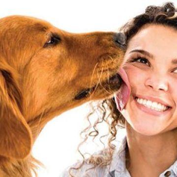 Investigación, Tener un perro reduce el riesgo de sufrir enfermedades cardiovasculares