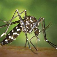 Los insectos que pican están de vuelta… Protege a tu familia