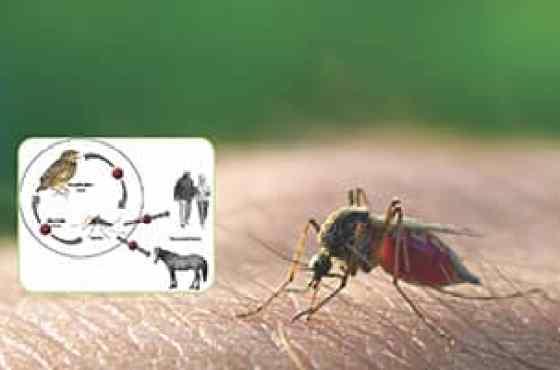 Funcionarios de salud emiten alerta sobre enfermedades transmitidas por mosquitos