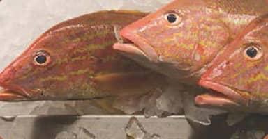 Minimizar el desperdicio de alimentos y mantener el pescado fresco