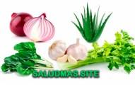 Lista De Plantas Medicinales Más Comunes
