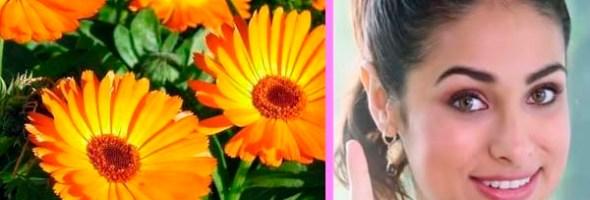 Beneficios De La Caléndula Para La Piel