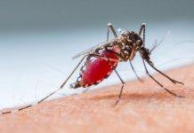 mejores métodos para curar la malaria