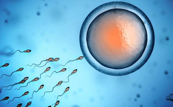 plomo a baja fertilidad