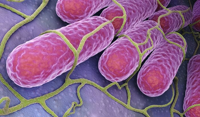 Bacterias del acné