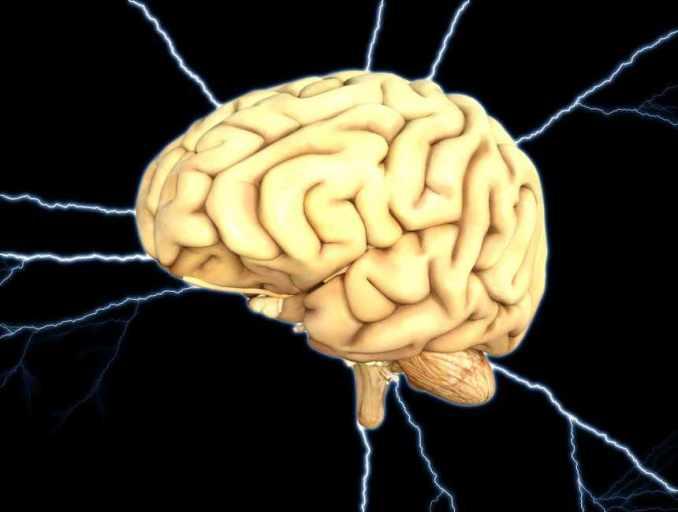 Cerebro Beneficios del Ginseng para el cerebro