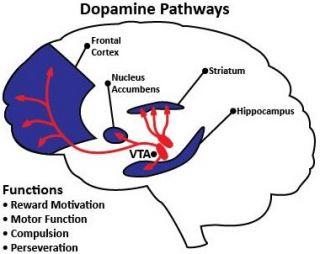 Qué es la dopamina, para qué sirve