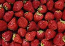 Fresas y salud digestiva