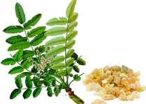 Boswellia Beneficios Propiedades