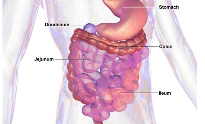 Saccharomyces boulardii y el Síndrome del Intestino Irritable
