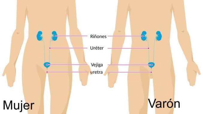 Infección de vejiga: síntomas Tratamiento de infección de vejiga (tracto urinario) Tratamientos naturales de la infección de vejiga ¿Qué tomar para la infección de vejiga?