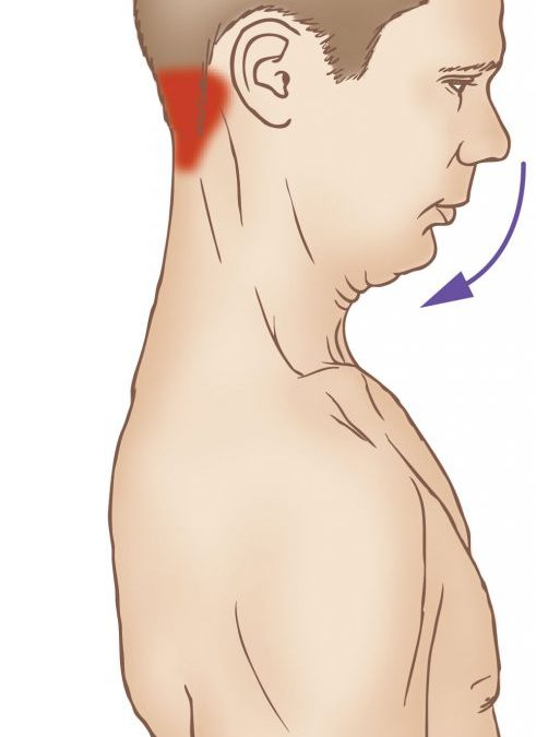 Saturday Stretch – The Suboccipital Group