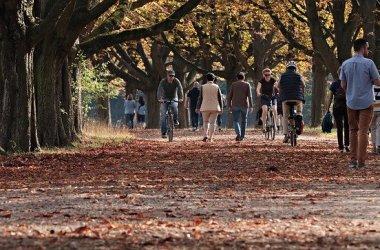Французские госслужащие пересядут на велосипеды за деньги