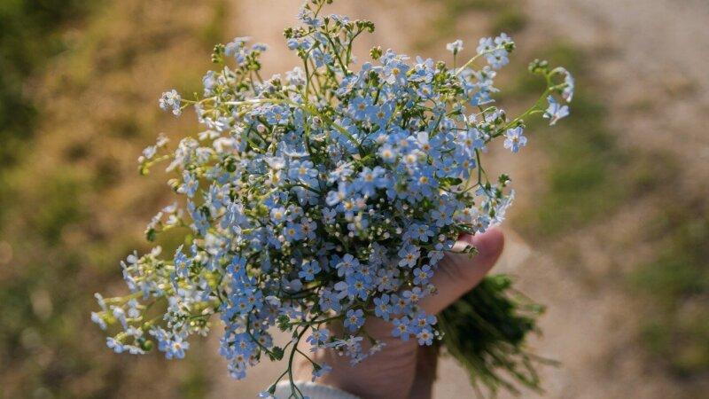 春の 風 を 待つ あの 花