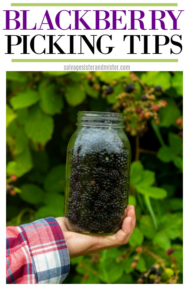 Blackberries grow wild in our state. Here are some blackberry picking tips AND how to preserve them with flash freezing your berries. Free food and so tasty. Get all the details on salvagesisterandmister.com