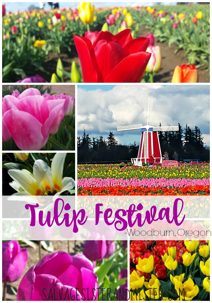 Traveling to the Pacific Northwest in the Spring? Don't forget to go to the tulip festival in woodburn Oregon. Travel Oregon! Over 40 acres of all different varieties. It's a beautiful place to go and get away from the hustle and bustle of life. See the beautiful flowers and unwind.