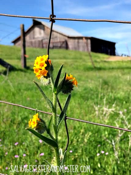 Flower and a barn. Country road. Taking a moment to breathe in life and let go of all the things there are to do. A Sunday drive with no destination and no rush!