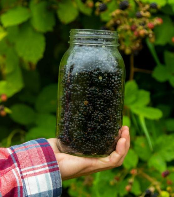 blackberry parfaits on salvagesisterandmister.com