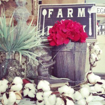 the coop de ville cotton stem