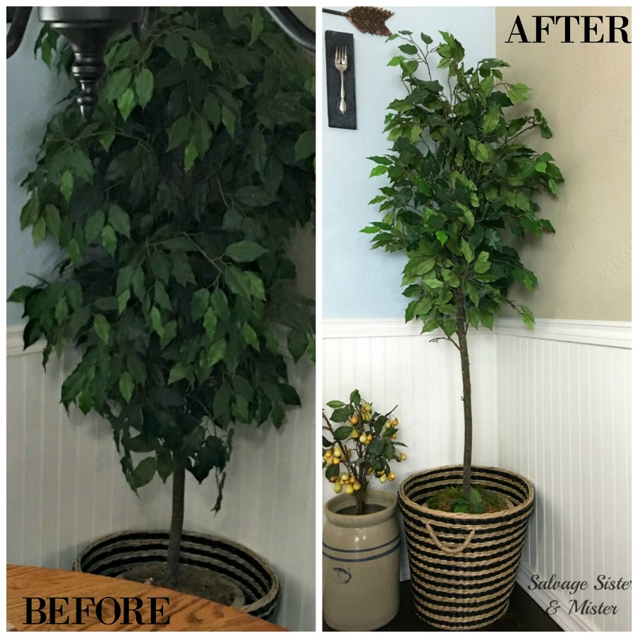 A before and after of a thrift store (restore) find updated. I couldn't purchase a fiddle fig leaf so this was the next best thing. I updated a faux houseplant to look new. I gave this inexpensive artifical ficus tree a haircut to give it a fresh new look. This DIY project is super simple and is very inexpensive.