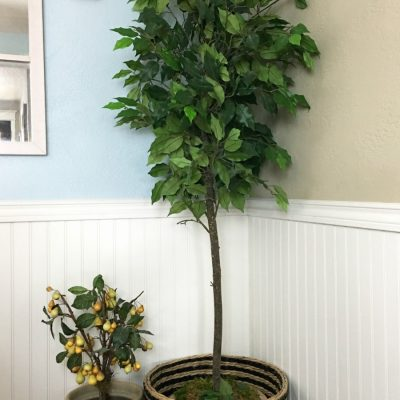 How to Update a Faux Houseplant to Look New. Updating a thrift store (restore) old ficus tree to a more modern new look. I couldn't do a fiddle fig leaf tree so this was the next best thing. This easy DIY project was super inexpensive and you can find these trees almost anywhere.