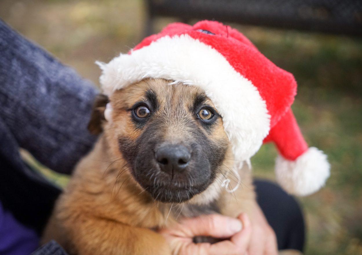 dog with Santa hat on