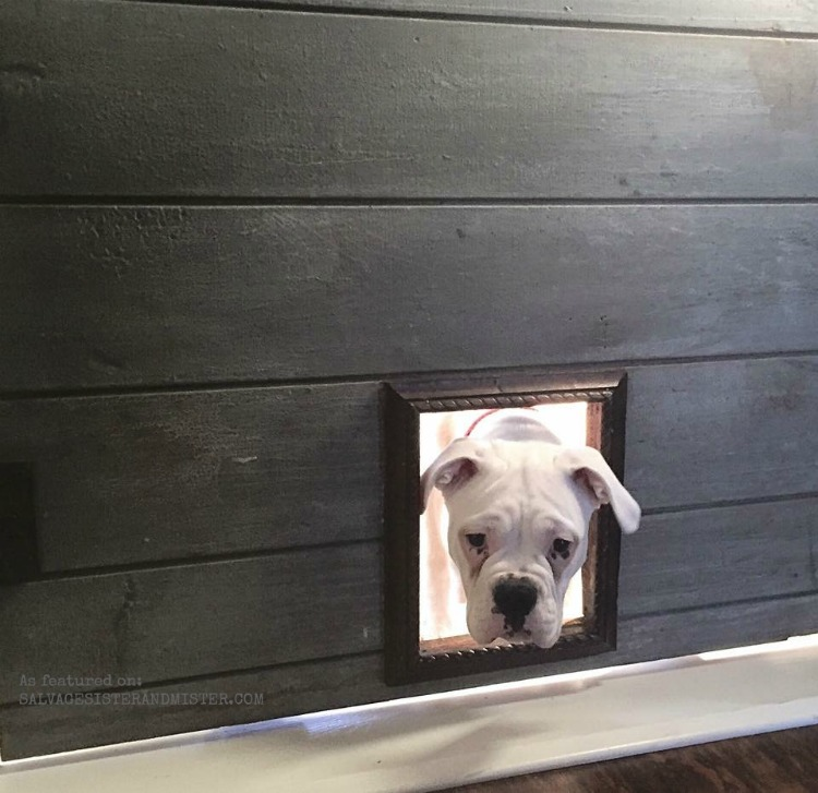 pet door that allows the cat in but keeps the dog out