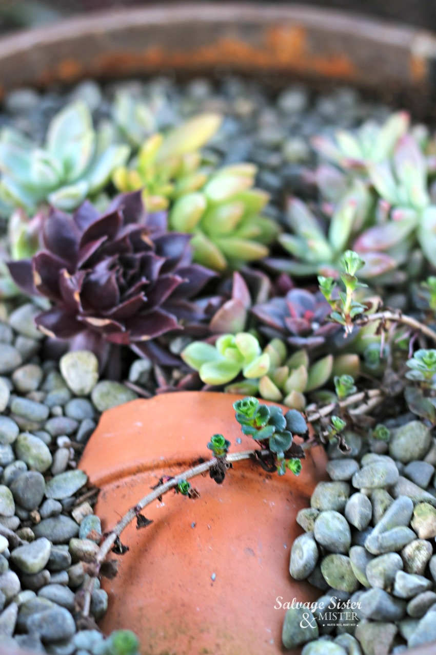 Creating a pot in pot succulent planter with a broken pot and vintage canister. #reuse #succulents
