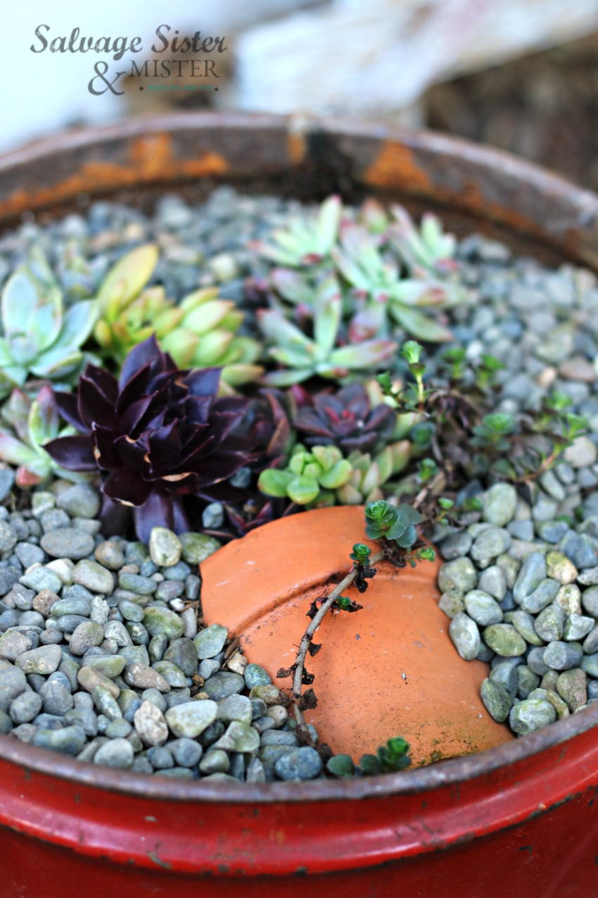pot in pot succulent planter made from a vintage conatiner and a broken pot #reuse #salvagesister #upcycle