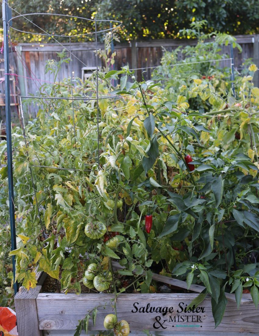 our garden - end of season
