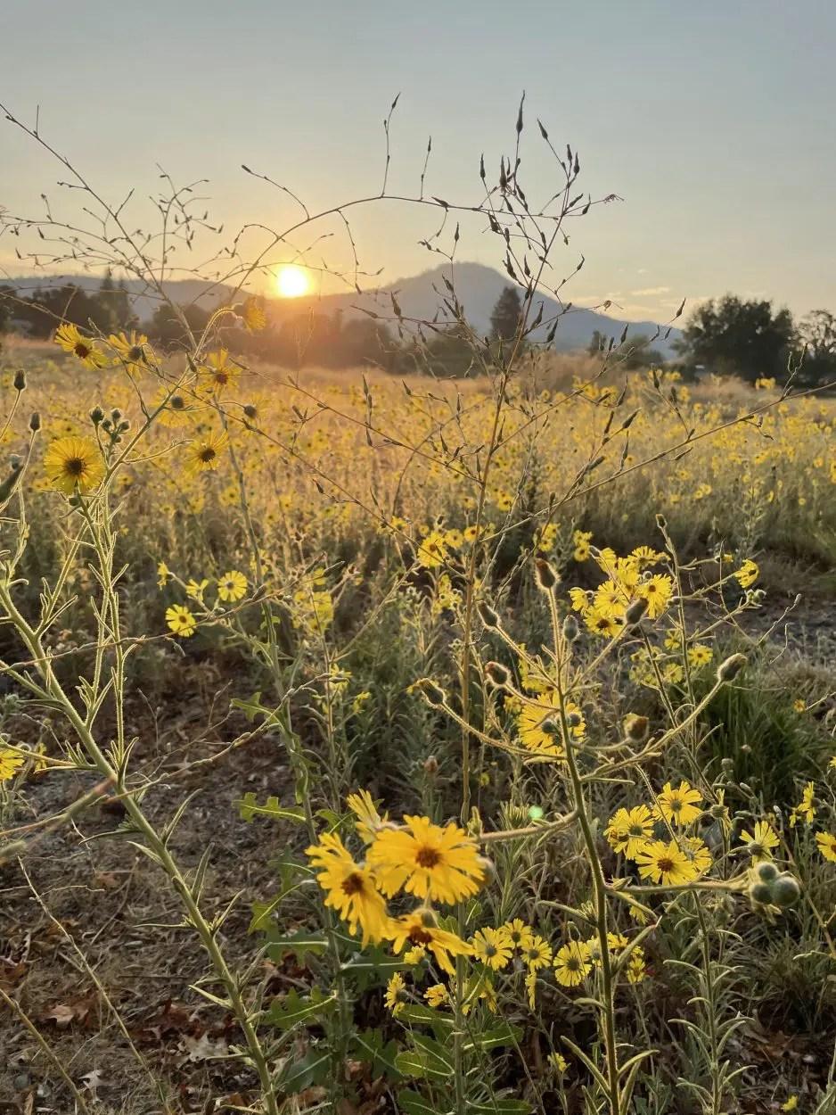 Southern Oregon Sunrise