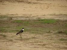 Oiseau du Saloum