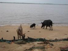 Les habitants de la plage